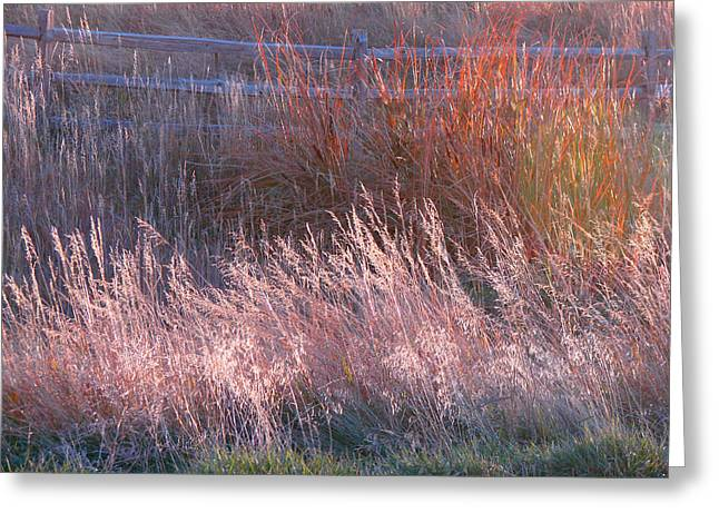 Grasses 1 Greeting Card