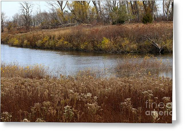 Grasses Of Autumn Greeting Card