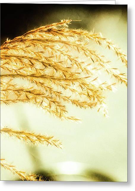 Grasses Of Gold Greeting Card