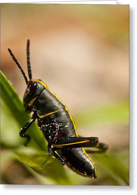Grasshopper 2 Greeting Card by Anthony Towers