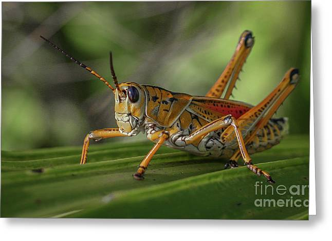 Grasshopper And Palm Frond Greeting Card