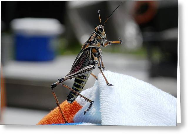 Dancing Grasshopper At The Pool Greeting Card