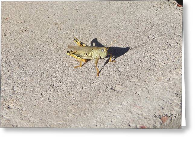 Grasshopper Curiosity Greeting Card