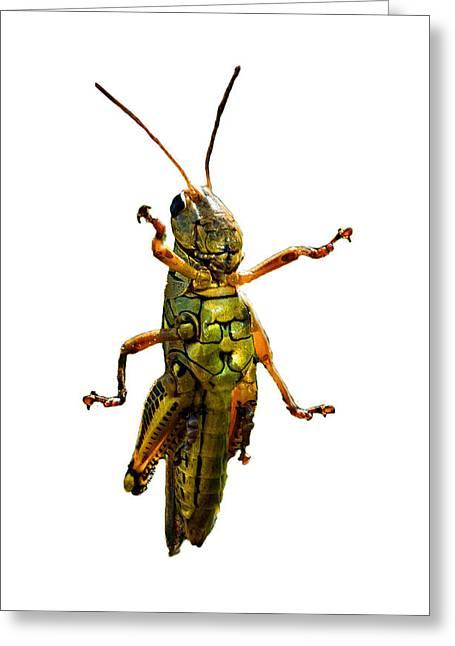 Grasshopper II Greeting Card by Gary Adkins