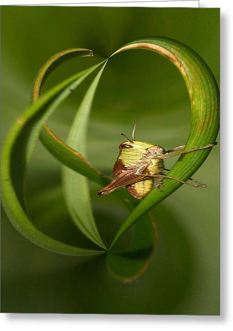 Greeting Card featuring the photograph Grasshopper by Jouko Lehto