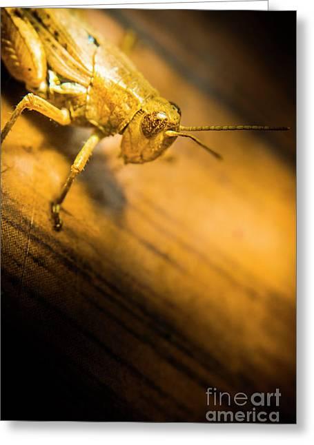 Grasshopper Under Shining Yellow Light Greeting Card