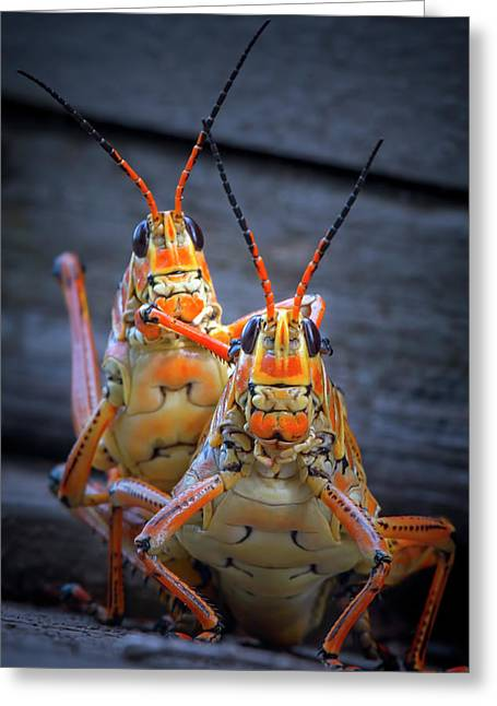 Grasshoppers In Love Greeting Card