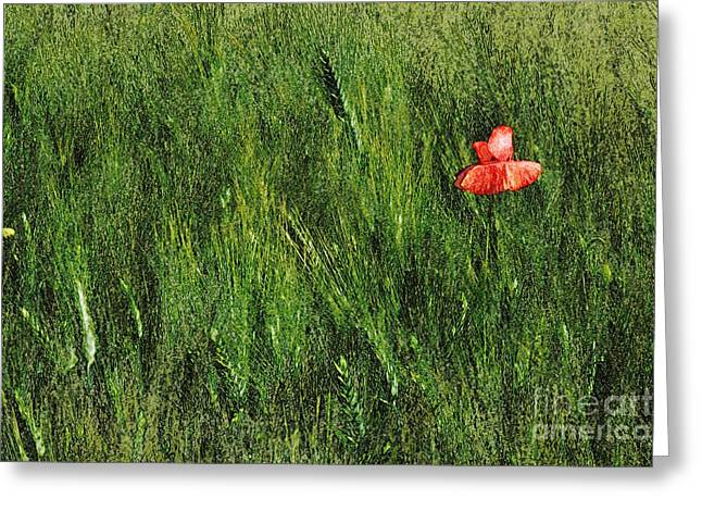 Grassland And Red Poppy Flower 2 Greeting Card