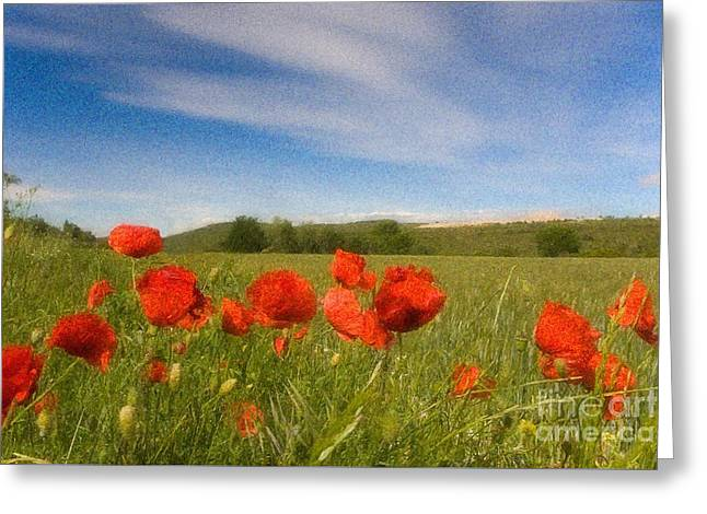 Greeting Card featuring the photograph Grassland And Red Poppy Flowers by Jean Bernard Roussilhe