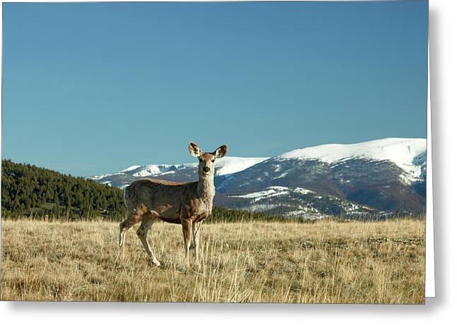 Grassy Mountain Deer Greeting Card by Todd Klassy