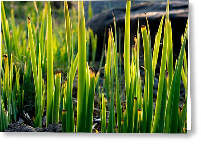 Grassy Sunshine Greeting Card by Andreas Berthold
