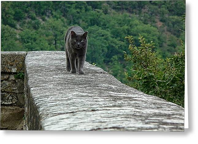 Gray Cat Prowling Greeting Card