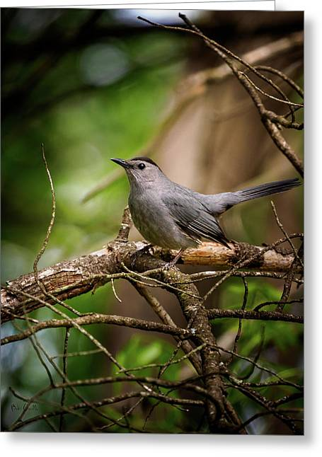 Greeting Card featuring the photograph Gray Catbird by Bob Orsillo