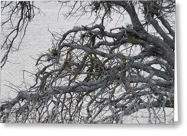 Gray Day At The Lake - Bare Branches 2 Greeting Card