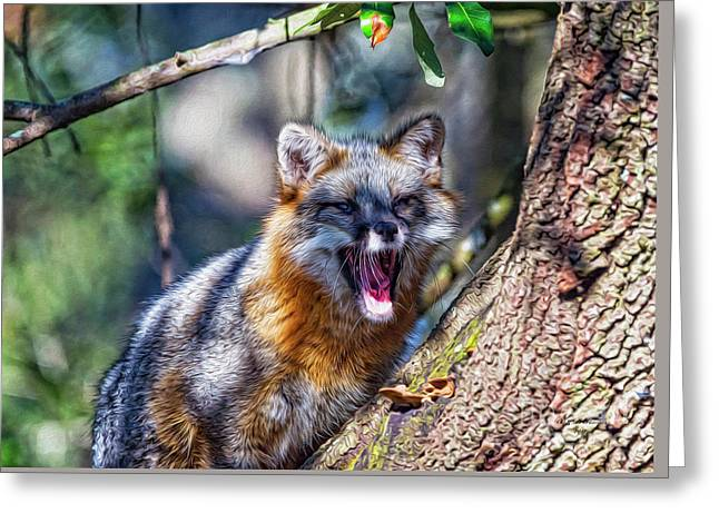 Gray Fox Awakens In The Tree Greeting Card