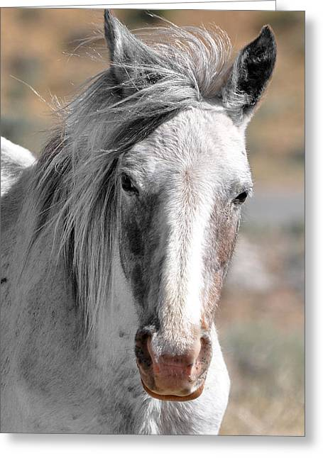 Gray Mare Greeting Card