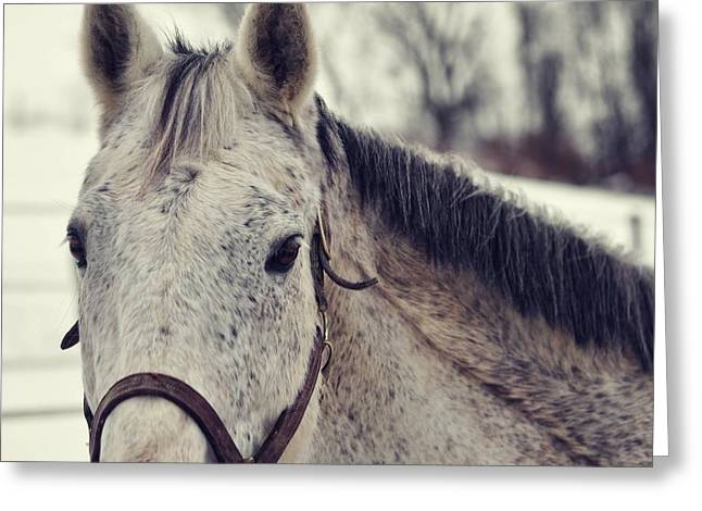 Gray On Winter White Greeting Card by JAMART Photography