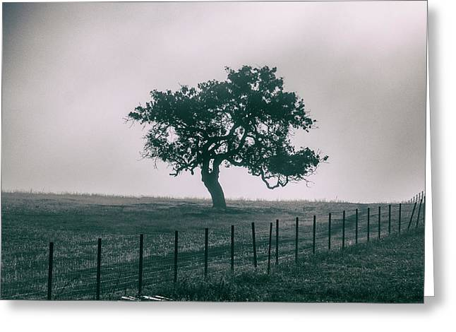 Gray Sky Morning Greeting Card