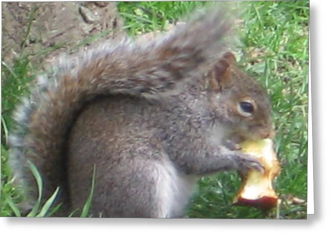 Gray Squirrel With An Apple Core Greeting Card