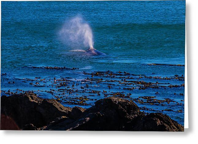 Gray Whale Blow Hole Greeting Card by Garry Gay