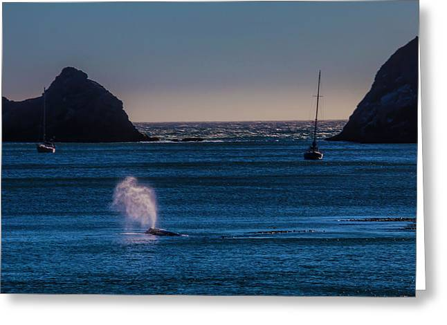 Gray Whale In Calm Bay Greeting Card