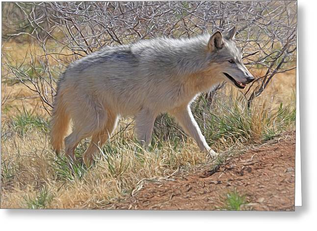 Gray Wolf Greeting Card by Donna Kennedy