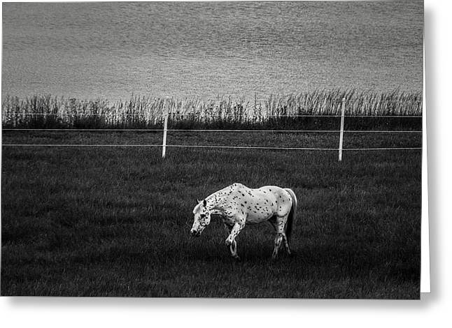 Graze Greeting Card by Off The Beaten Path Photography - Andrew Alexander