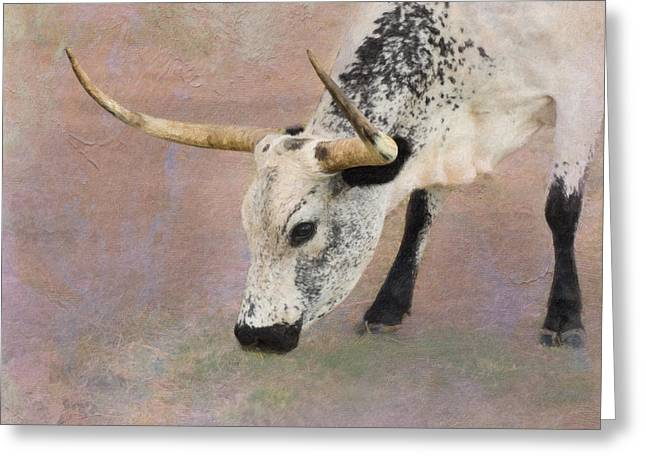 Texas Longhorn Cow Greeting Cards - Grazing Greeting Card by Betty LaRue