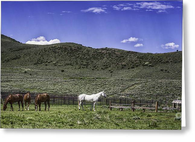 Grazing..... Greeting Card