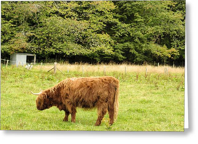 Greeting Card featuring the photograph Grazing by Christi Kraft
