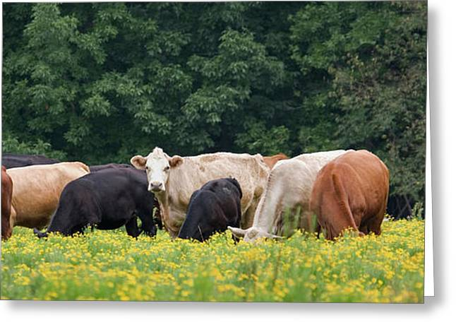 Usa Digital Greeting Cards - Grazing Greeting Card by Glennis Siverson