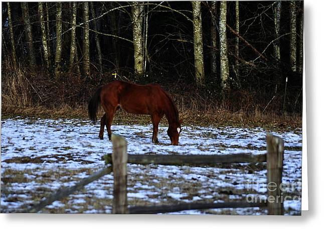 Grazing In A Washington Winter Greeting Card by Clayton Bruster