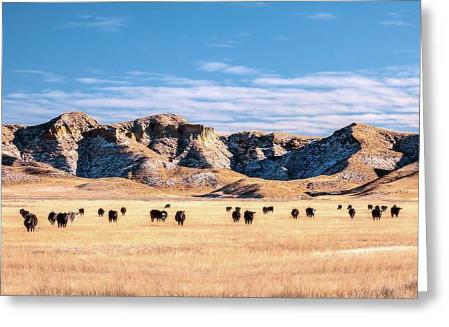 Grazing In The Badlands Greeting Card