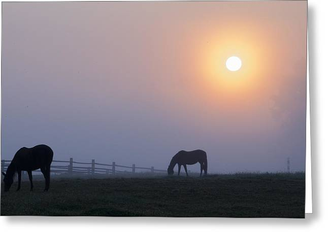 Grazing In The Fog At Sunrise Greeting Card by Bill Cannon
