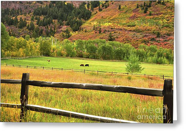 Grazing In The Grass Greeting Card by Jim Chamberlain