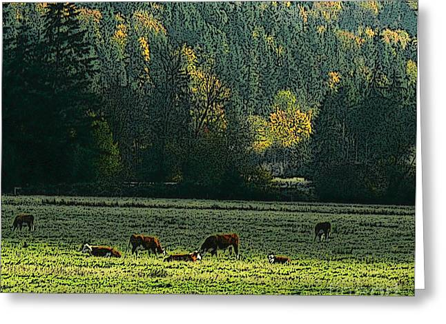 Grazing In The Skokomish Valley Greeting Card by Terri Thompson
