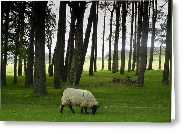 Grazing In The Woods Greeting Card