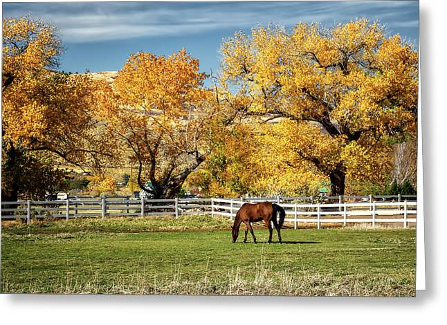 Grazing Greeting Card by Maria Coulson