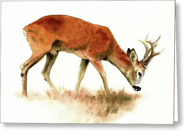 Grazing Roebuck Watercolor Greeting Card