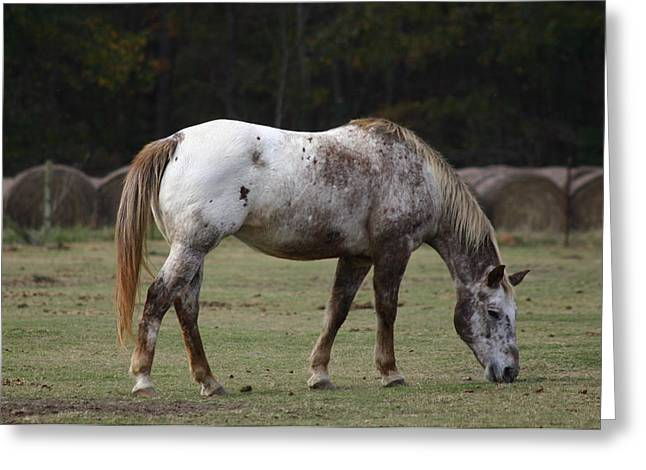 Grazing Time Greeting Card by Kim Henderson