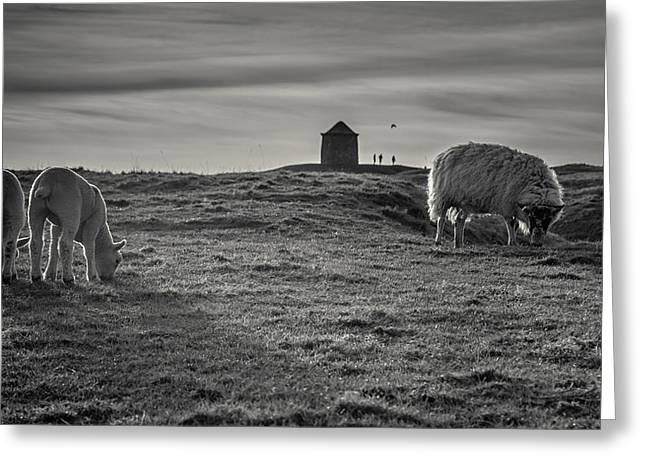 Grazing With The Family Greeting Card by Chris Fletcher