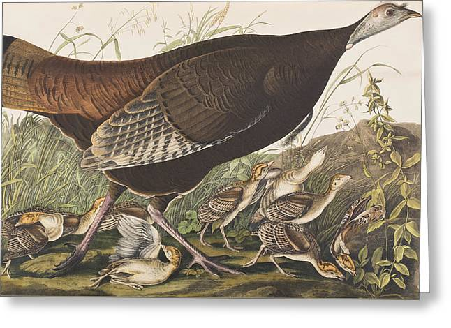 Great American Hen Greeting Card by John James Audubon