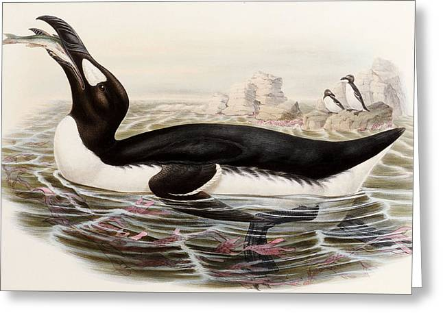 Great Auk Greeting Card