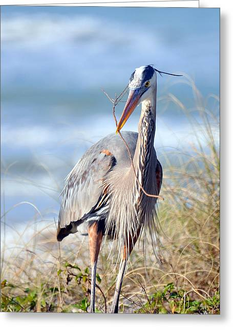 Great Blue Heron - Nesting Greeting Card by Rose  Hill