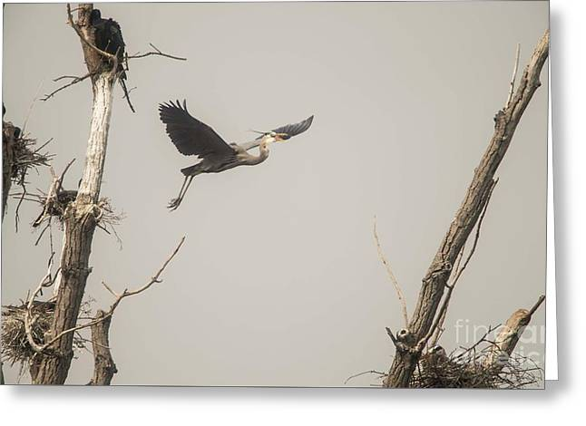 Greeting Card featuring the photograph Great Blue Heron - 6 by David Bearden