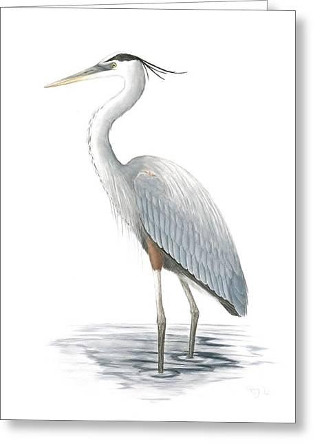 Great Blue Heron Greeting Card by Anna Bronwyn Foley