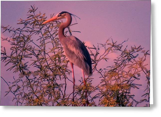 Great Blue Heron - Artistic 6 Greeting Card