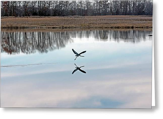 Great Blue Heron At Take-off Greeting Card by Jennifer Nelson