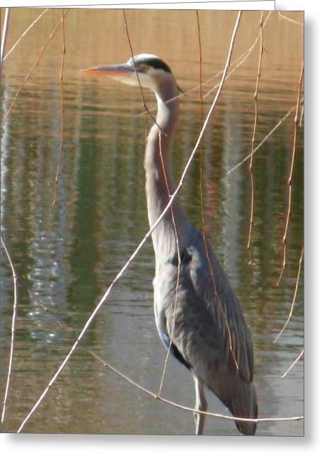 Greeting Card featuring the photograph Great Blue Heron By Willow Tree by Jeanne Kay Juhos