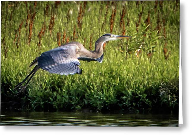 Great Blue Heron Greeting Card by Cathy Cooley